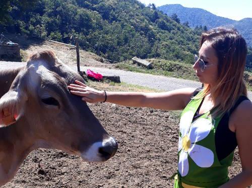 Sharon e una mucca da latte