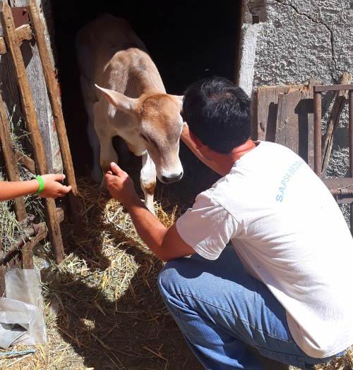 foto di Davide Timossi ed uno dei suoi vitellini